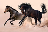 Two horse in dust
