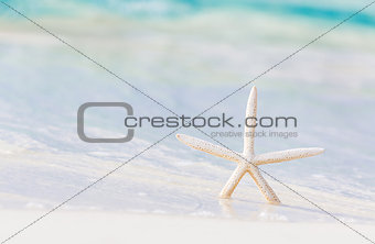 Little starfish on the beach
