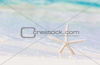 Little starfish on the beach