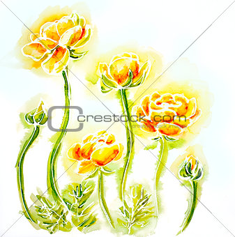 Painted watercolor card with globe-flowers