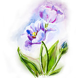 Purple tulips, watercolor painting.