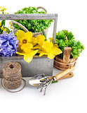 Spring flower and tool for flower-growing
