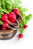 Fresh ripe radish vegetable with green leaves