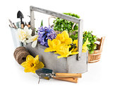 Flowers in the wooden case and working tools flower-growing