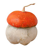 decorative pumpkin (Cucurbita pepo) on the white background