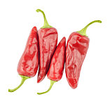 red  peppers isolated on a white background