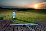 Book concept Concept landscape young boy walking through field a