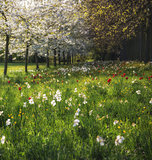 Spring Summer flower meadow landscape in dappled sunlight
