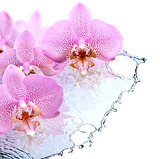 Orchid And Water