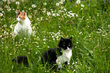 Two cats on meadow