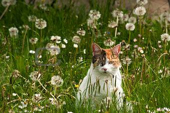 Cat on meadow