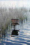 Birdhouse in the water