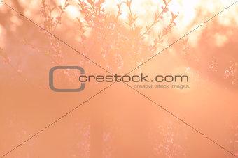 Beautiful peach garden background
