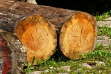felled tree trunks