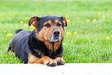 Dog portret over green grass