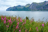 Summer Senja coast (Norway)