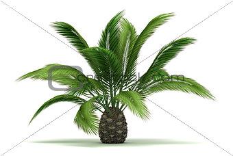Single Palm Tree