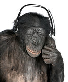 Monkey listening music closed eyes