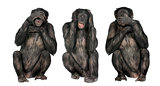 Three Wise Monkeys : Chimpanzee - Simia troglodytes (20 years ol