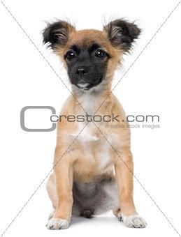 Bastard puppy sitting (4 month old)
