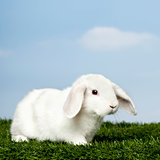 White Rabbit on grass against blue sky