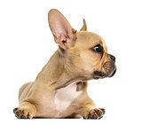 French Bulldog puppy lying down, looking away, isolated on white