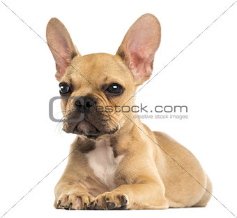 French Bulldog puppy lying down, isolated on white