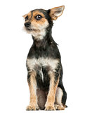 Front view of a Crossbreed dog sitting, isolated on white