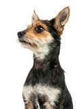 Close-up of a Crossbreed dog's profile, isolated on white