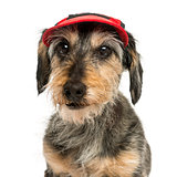 Close-up of a Dachshund wearing a cap, 15 years old, isolated on