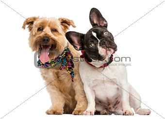 French Bulldog and crossbreed dog sitting next to each other, is