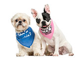 Shih Tzu and French Bulldog puppy wearing bandana sitting togeth