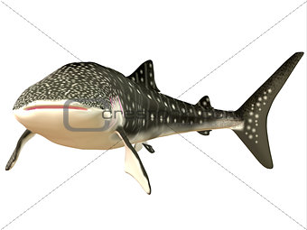Whale Shark Profile