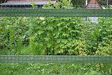 Fence Phase