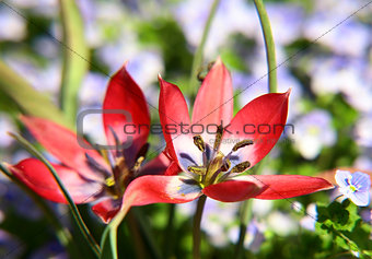Beautiful spring red flower