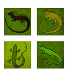 Four lizards