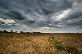 Stormy sky landscape over wetlands in countryside