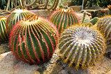 Giant cactus in Nong Nooch Tropical Botanical Garden, Pattaya, T
