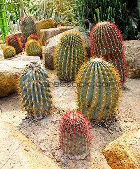 Cactus in Nong Nooch Tropical Botanical Garden, Pattaya, Thailan