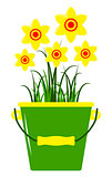 daffodils in bucket