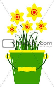 daffodils in bucket