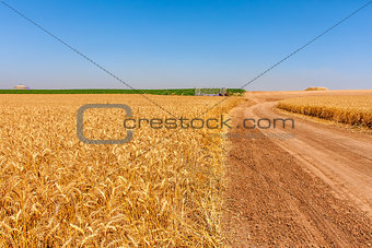 Country road and rural wheat fields.