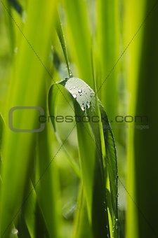 Green Vitality Grass