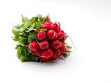ripe radish