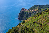Terraced vineyards and Mediterranean sea in Italy.
