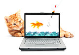 Goldfish, cat, laptop