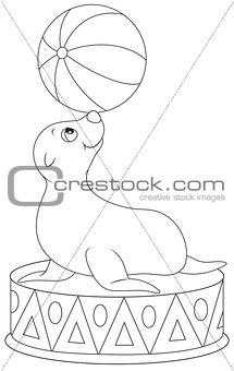 Circus seal equilibrist