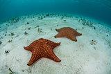 Sea Stars on Sand