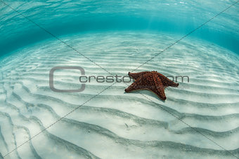 Sea Star on Sand