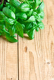 Basil background